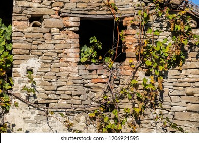 Old abandoned farmhouse in Langhe, the largest wine region in Piedmont (Unesco World Heritage Site), with facade covered with vines.