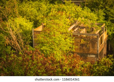 Old abandoned haunted house in the forest