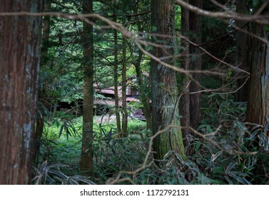 Old abandoned house in the Japanese countryside barely visible through tree trunks and branches