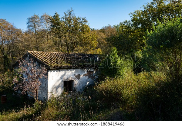 old-abandoned-house-woods-600w-188841946