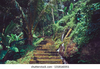 Old abandoned road in the jungle forest on Bali island. Indonesia