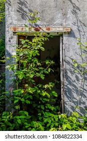 old abandoned room entrance covered with bushes