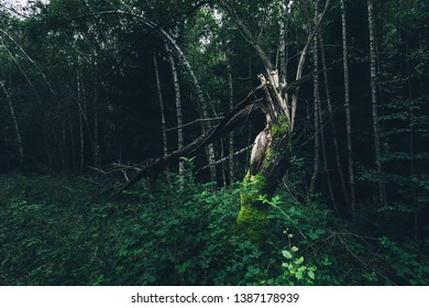 An old abandoned tree stands in a green lush forest