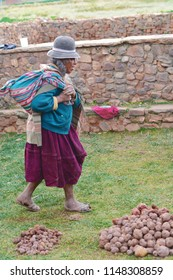 Old age woman wearing traditional aymara clothes works with the potatoes in the countryside.