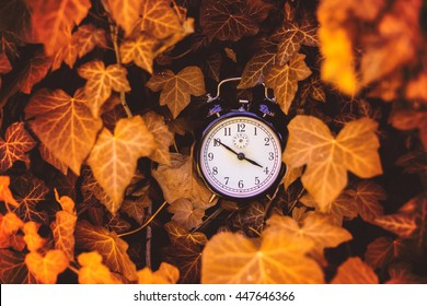 Old alarm clock between yellow leaves in the nature