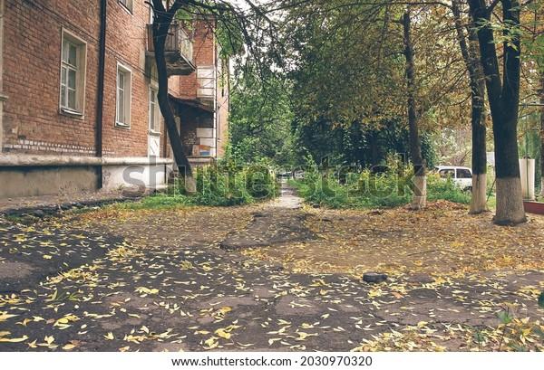 old-asphalt-path-covered-fallen-600w-203