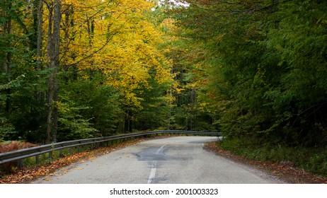 Old asphalt road in autumn forest