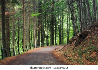 old asphalt road through beech and conifer forest.  beautiful summer scenery. broken metal fence along the edge of a hill. spot of light on the road