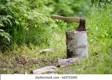 The old axe on a birch stub