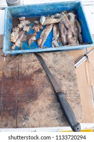 Old bait board with knife and cut up squid for fishing on a tourist charter boat in Far North, Northland, New Zealand, NZ