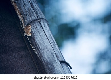 An old bamboo with blurry background isolated unique photograph