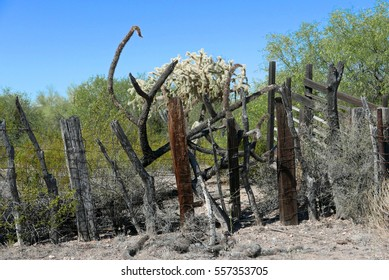 Old barbed wire fence and vegetation at an abandoned farm in Organ Pipe National Park in Southern Arizona near the Mexican border