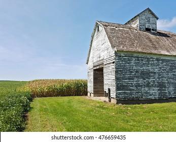 Old barn in a corn field