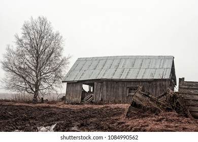 An old barn house stands by a birch tree on the wet fields of the rural Finland on a spring day.