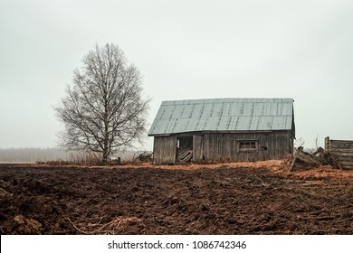 An old barn house stands on the muddy fields by a birch tree. The springtime rains are spraying the scene with water.