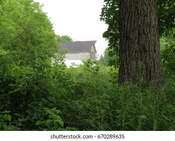Old Barn in Nature