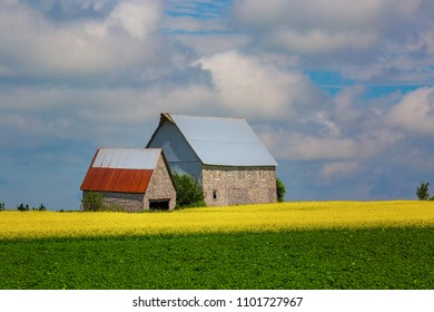 Old barns among a fields of canola and soybeans.