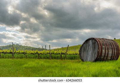 An old barrel for wine in the countryside near Volterra with a vineyard in the background