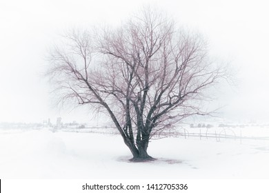 An old barren tree sits in a foggy snow-covered field. An old sprinkler system awaits Spring on the farm. In the distance, a bridge crosses a river to a rural town.