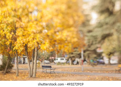 Old bench in the autumn park. Natural optical tilt shift photo.