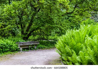 Old bench in a city park surrounded by vegetation.