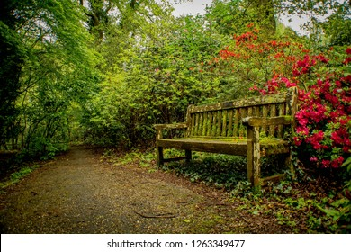 old bench in a dense park