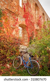 Old bicycle against brick wall overgrown with vine
