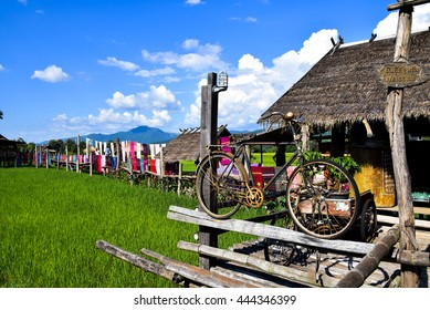old bicycle in front green farm in Nan, northern Thailand