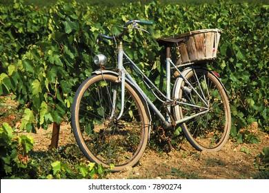 Old bike in vineyard in France
