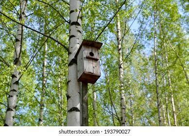 The old bird house on a birch.