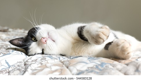 Old black and white cat lying on a bed with paws stretched out.