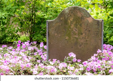 An old blank gravestone surrounded by purple and white flowers. Green bushes behind. Shady day.