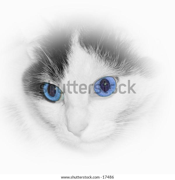 Old blue eyes