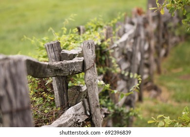 Old board fence with vines growing on it