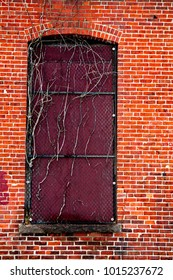 Old boarded window with iron grates and dead vines