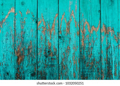 Old boards with cracked cyan paint. Textured wooden old background with vertical lines. Wooden planks close up for your design. Green-blue many times painted old wall with lagged fragments of paint