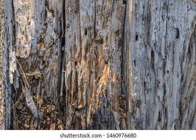 Old boards of the wooden deck of an abandoned boat are damaged by a shashel (Anobium punctatum). Light natural background. Shooting from top to bottom. Horizontal layout option.