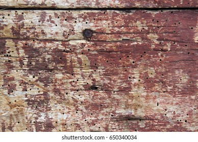 Old boards with woodworm holes and burrows created by beatles Anobium punctatum