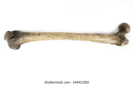 old bone isolated on white background