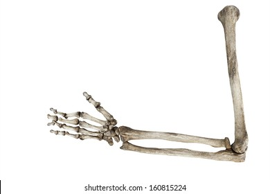 old bones of the human hand isolated on white background