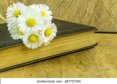 Old book on a rustic wooden board with daisies