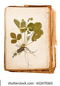 old book - old paper texture in detail - herbarium