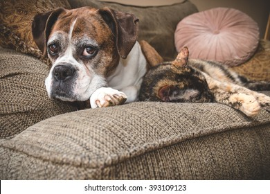 Old Boxer Dog and Cat Napping