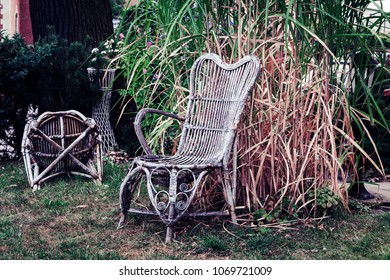 An old braided chair in the garden in the front of a reed shrub. Recorded in Poland.