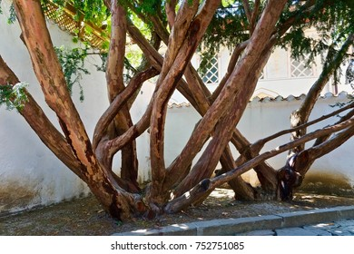 Old, branchy tree in the yard.