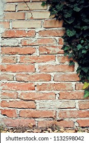 old brick and ivy background