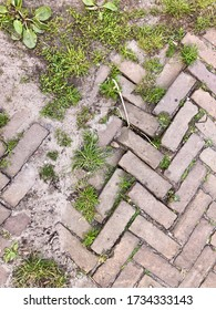 Old brick pavement with weeds in herringbone pattern