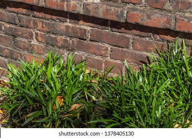 Old brick retaining wall bordered with liriope, horizontal aspect