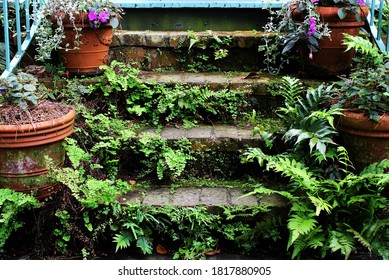 old brick steps overgrown with plantlife