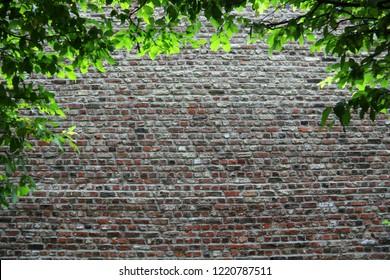 Old brick wall behind trees